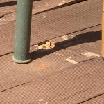 Everlast decking